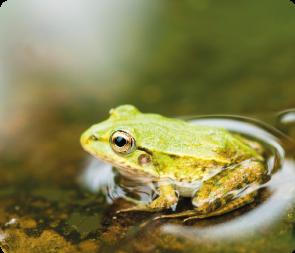 I Frog Safety